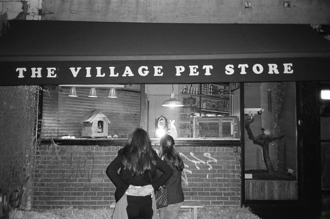 pet stores report Puppies bought from pet shops are more likely to develop owner  in a report  published in the journal of veterinary behavior a group of.
